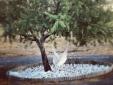 Sunny House 3 Rooms Grandola charming Kitchen