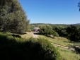 Centenary wild olive tree in the garden