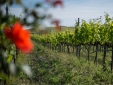 Stay at Azienda Agricola Ceraudo Marina di Strongoli Italy wine tasting vineyard nature