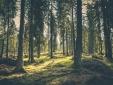 SPA Suite Hotel Milla Montis