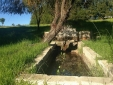 Best Charming Authentic House with pool Port Covo in Alentejo Portugal
