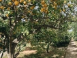 Sa Caseta Mallorca Spain house to rent eco friendly