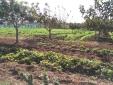 BIO Vegetables garden