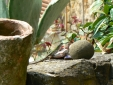 Lizards everywhere . . . .