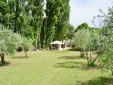 Garden Oliviers