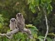 Masseria Uccio - Owl