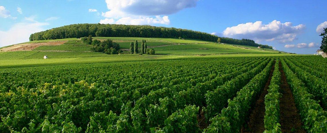 Montigny la Resle
